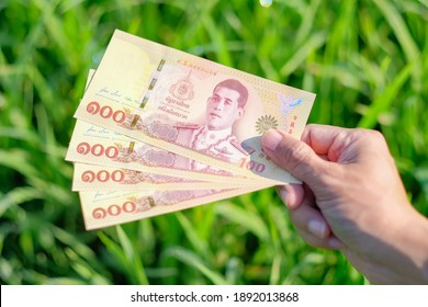 New design 100 Thai banknote with green rice farm background