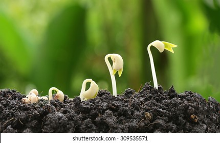 New development and renewal as a business concept of emerging leadership success as a strong seedling growing as a concept of support building a future.