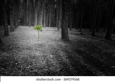 New development and renewal as a business concept of emerging leadership success as the re-birth of the forest around and area that was destroyed, concept of hope and rebirth
