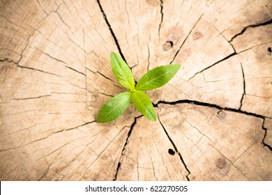 New development and renewal as a business concept of emerging leadership success as an old cut down tree and a strong seedling growing.