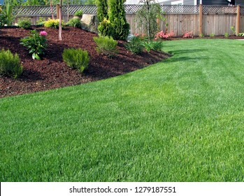 New edit of closeup capture of a perfectly pure stand of lawn grass in healthy green color surrounded by planted areas with shrubs and bark mulch cedar panel fence background fine details and texture