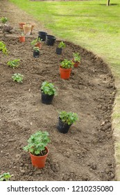 A new empty flower bed is planned by placing plants in containers in their planting positions