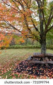 A New England autumn picnic area.