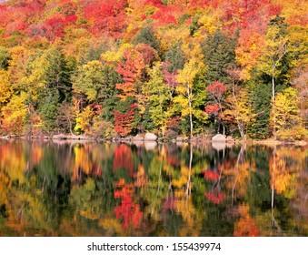 New England Autumn Trees Reflection