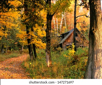 New England Cabin and Colorful Maple Trees in Autumn