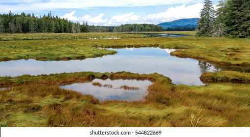 New England Marshland:  Grassy wetlands cover a portion of the shoreline on Mount Desert Island near Acadia National Park.