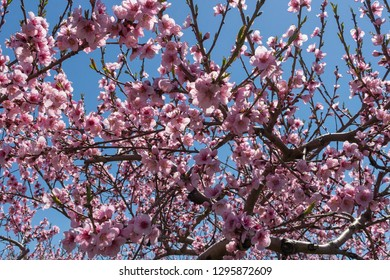 Blossom Tree England Images Stock Photos Vectors Shutterstock