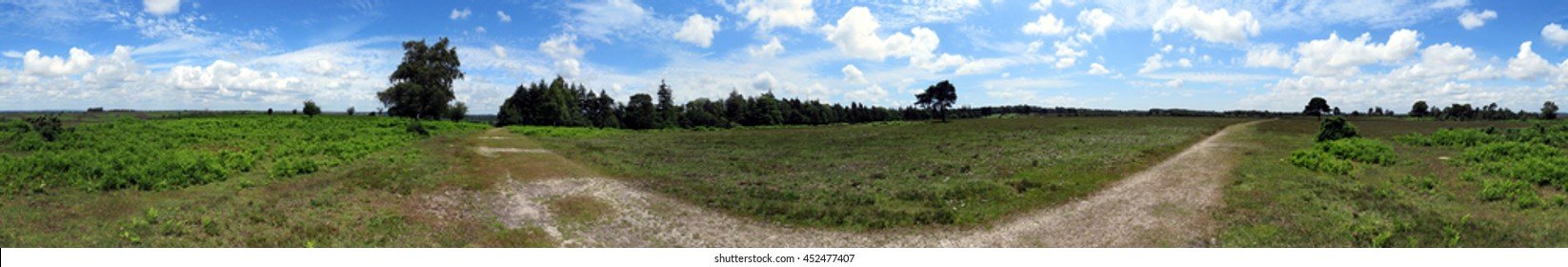 New Forest - 360 Panorama