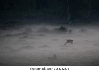 New Forest deer in the mist