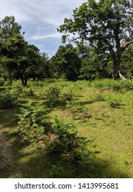 New Forest, Hampshire exploration / rambling