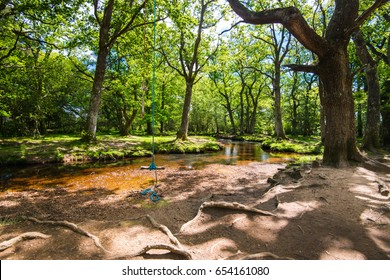 The New Forest national park Hampshire.
