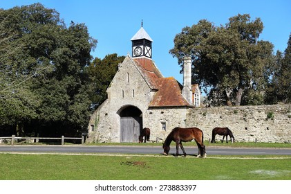 New Forest Ponies grazing by a medieval clock tower and wall