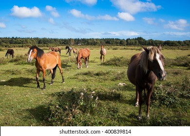 New Forest Ponies on a green field with blue sky and white clouds