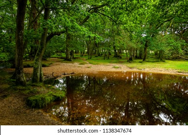 The New Forest, Southampton, Hampshire, England