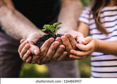 New generation. Close up of elderly hands with germinated stalk in soil and child hands helping