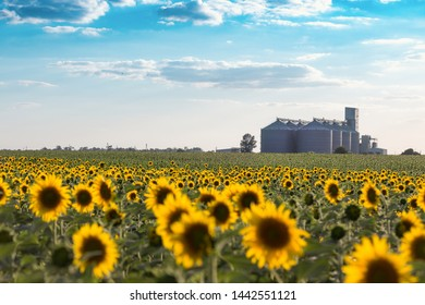 new grain elevator and a field of sunflowers in the foreground