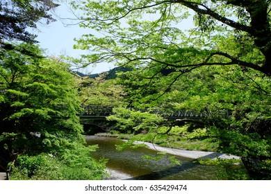 New green leaves and Kaedebashi (Kaede bridge) over the Mitake valley, Ome, Tokyo, Japan