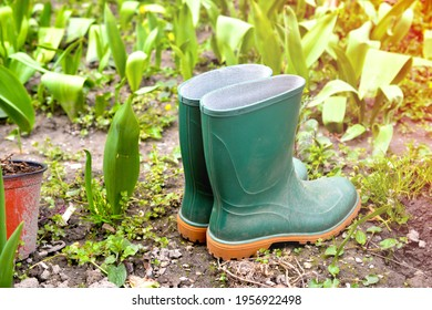 new green rubber boots in a garden image
