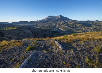 New growth at Mount Saint Helens blast zone, with remains of old fallen trees from the blast.
