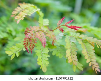 New growth on tree red leaves close up nature photography
