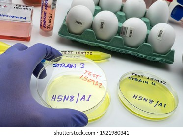 new H5N8 strain of avian influenza spread in humans, scientist with infected egg, conceptual image