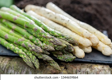New harvest of  white and green asparagus vegetable in spring season, asparagus growing up from the ground on farm close up