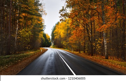 New highway road in an colorful Autumn forest near Riga, Latvia, the Baltic states.