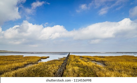 New land is created in the mud flats of a salt marsh in the Wadden Sea on the Groningen coast