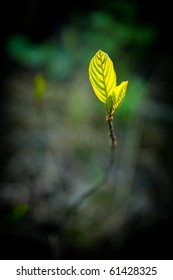 New leaf growing of ground