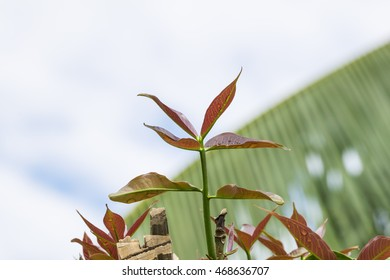 New leaves of tree