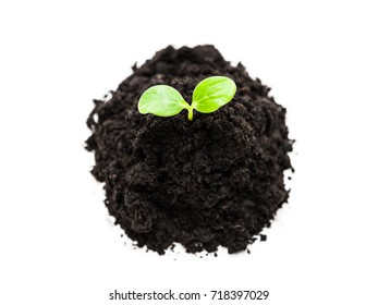 New life concept - small green plant sprout leaf growth at dirt soil heap white isolated