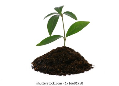 New life concept - young green plant with heap of brown soil isolated on a white background in close-up