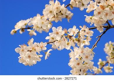 new life flower in blue vivid sky (spring concept)