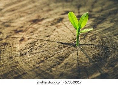 New life idea concept with seedling growing sprout (tree).business development and eco symbolic.