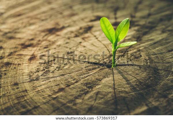Neue Lebensidee-Konzept mit Samen wachsenden Spross (Baum).Business-Entwicklung und Öko-Symbolik.