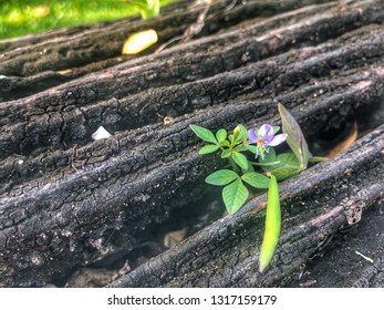 new life on the old age wood A single leaf growing out of a dead stump in a forest There sun shining on the leaf only In the background are trees with leaves and there some light breaking through