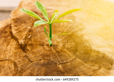 New Life with seedling growing sprout of old wood.Ecology concept.