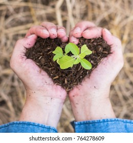 New life of young tree planting growing on soil in volunteer's or farmer's heart hands for nature, go green, csr campaign, arbor day, Tu Bishvat/Tu B'Shevat, world environment protection concept