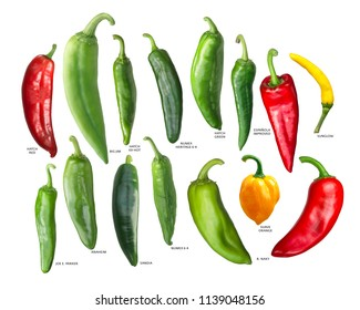 New Mexican Chili Peppers or Hatch Chiles, whole pods