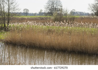 New nature in the form of widening of the Slingebeek in the municipality of Winterswijk in the Achterhoek in the Netherlands
