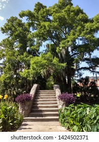 New Orleans City Park- Beauty in City Park
