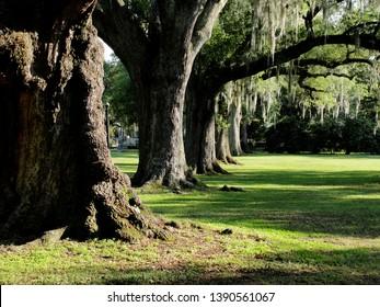 New Orleans, Louisiana - May 31, 2010: Audubon Park oak trees