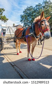 New Orleans, USA - Dec 17, 2017: A mule-driven tourist stagecoach parked along Decatur Street in the French Quarter. Such an iconic sightseeing cart brings back a nostalgic charm to town.