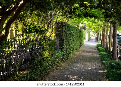 New Orleans, USA Old street historic Garden district in Louisiana famous town city with cobblestone sidewalk path tunnel in spring green color