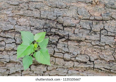 new plant growing on wood background, a concept for don't give up. Turn crisis into opportunity