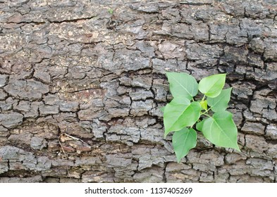 new plant growing on wood background,concept for don't give up.Turn crisis into opportunity