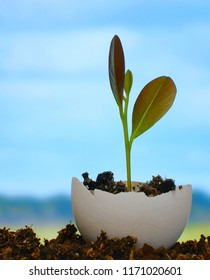 A new plant growing in rich soil inside a broken egg shell. Distant fields and blue sky are in the background. Concept of rebirth, new life or ecology
