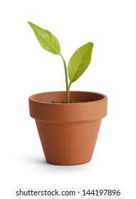 New plant in small orange pot isolated on white background.