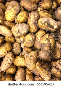 New potatoes;  background of new, unwashed potatoes