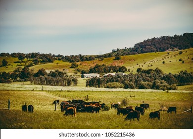 New South Wales farmland